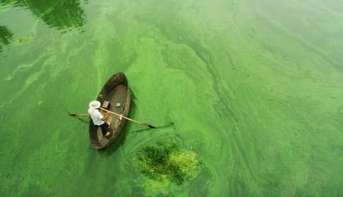 太湖-绿藻.jpg